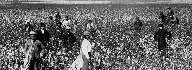 Slaver på bomuldsmarken, ca. 1897.